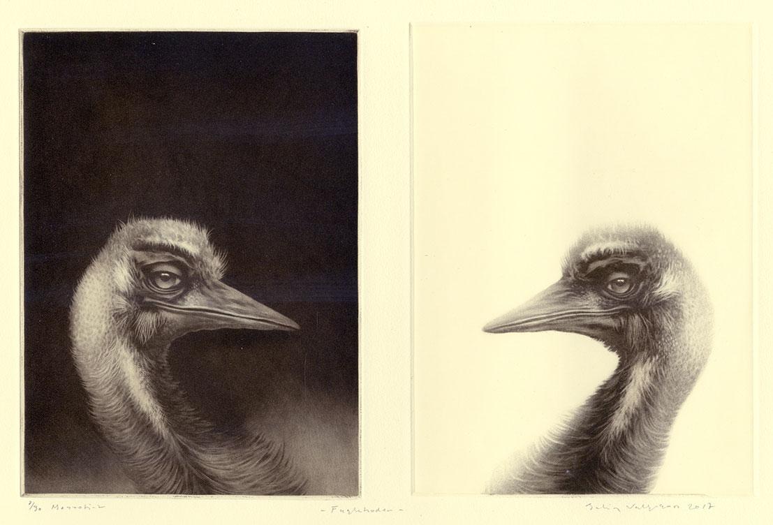 birds facing eachother