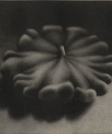circular plant