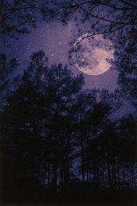 moon in a nighttime purple sky slightly obscured by trees